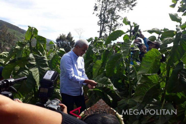 Ganjar: Saya selalu membela petani tembakau