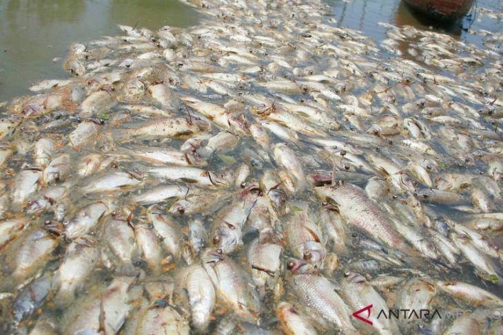 Banyaknya ikan mati di Sungai Kaloran diduga ini penyebabnya