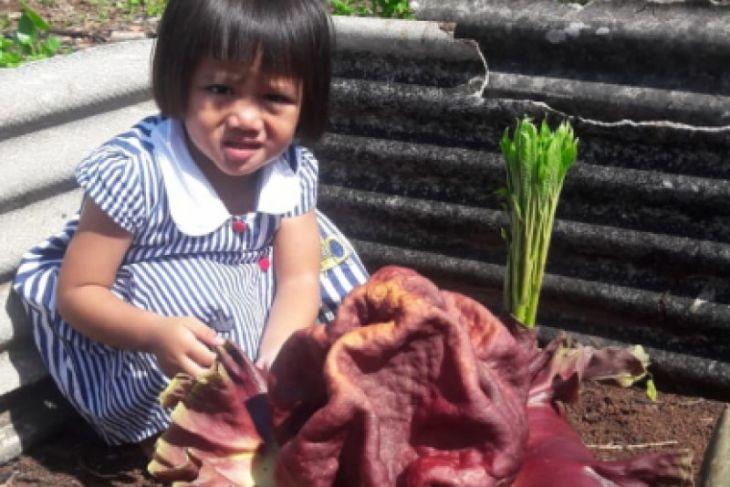 Bunga langka tumbuh subur di Tambun