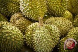Gorontalo Utara Layak Kembangkan Wisata Buah Durian