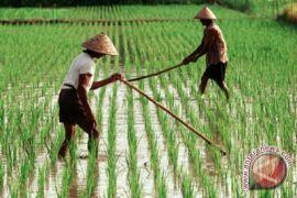 Dinas Pertanian Gorontalo Perketat Pengawasan Benih