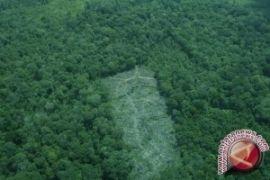 KLHK Belajar Monitoring Hutan Produksi Di Belanda