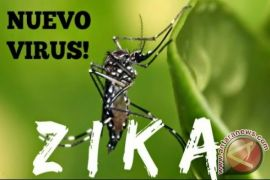 WHO: virus Zika berpeluang menyebar ke Eropa