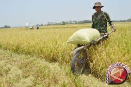 DPRD Gorontalo Utara harap Pemkab Tingkatkan Produksi Beras