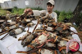 Harga Kepiting Bakau Gorontalo Utara Rp40.000/Kg