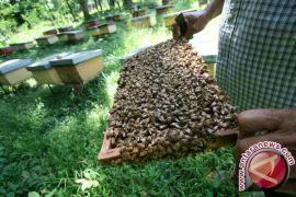 Slovenia Rayakan Hari Lebah Dunia