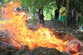 Catatan Akhir Tahun - Gorontalo Melawan Antraks Untuk Bangkitkan Sektor Peternakan