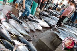 Akademisi ingatkan pentingnya konsumsi ikan bagi kesehatan