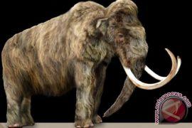 Kerangka mammoth terjual sekitar 550.000 euro di sebuah lelang