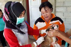Dinkes Imbau Korban Gigitan Anjing Ditangani Faskes