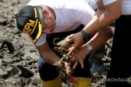 Peneliti : Kepiting Mangrove Di Catp Berkurang