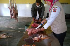 Disnakkeswan Gorontalo Utara Periksa Daging Sapi di Pasar Tradisional