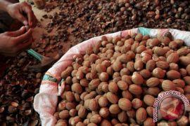 Sulawesi Utara Buka Pasar Baru Ekspor Pala ke Arab Saudi