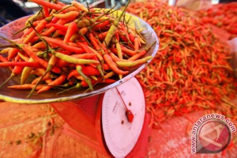 Harga Cabai Rawit Di Gorontalo Utara Turun
