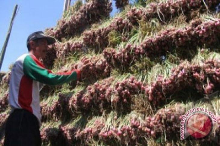 Harga Bawang Merah di Gorontalo Utara Naik
