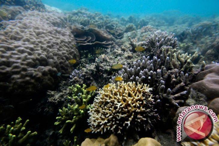 Presiden minta Maluku Utara optimalkan sektor unggulan