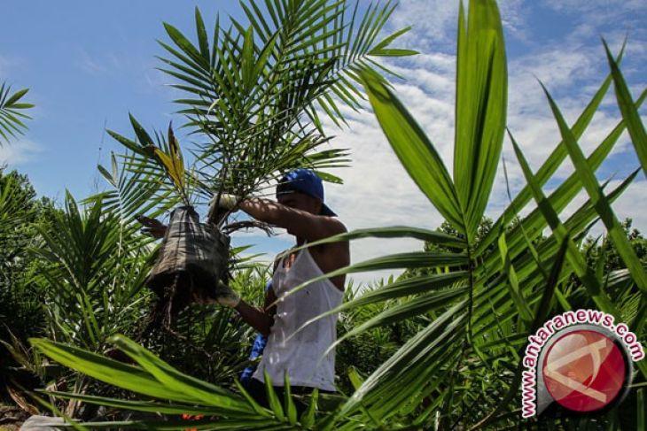Tekad Gorontalo Mengembalikan Kejayaan Kelapa Indonesia