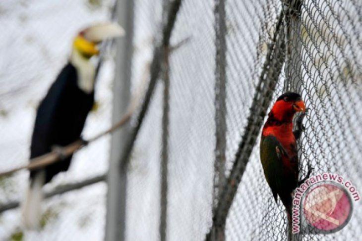 Gubernur Dukung Perlindungan Burung Di Gorontalo