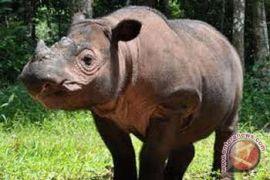 Badak Sumatera jadi Satwa Nasional 2012