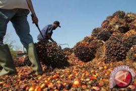Harga CPO di Jambi naik Rp56 per kilogram