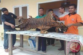 Polda Jambi  tangkap sindikat penjualan kulit harimau