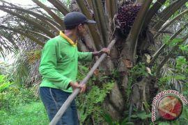 Petani sawit swadaya Jambi terima sertifikat ISCC