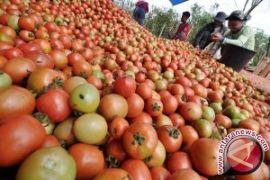 Nilai tukar petani Jambi turun 0,11 persen