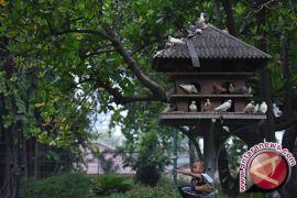 Kota Jambi gandeng  Ragunan buat taman burung