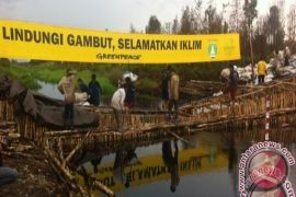 Pemprov Jambi komitmen rehabilitasi lahan gambut