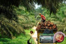 Foksbi dorong ada landasan fundamental industri sawit