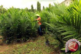 Jokowi moratorium konsesi lahan sawit di beberapa provinsi