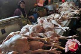 Satgas pangan telusuri penyebab tingginya harga ayam