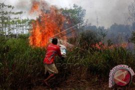 Satgas temukan empat titik api di lahan gambut