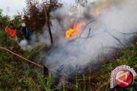 Dishut: 566 hektare hutan-lahan Jambi terbakar