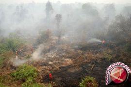 Januari-Oktober 101 Hektare Hutan Batanghari Terbakar