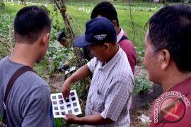 Petani Batanghari siap gunakan pestisida organik