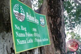 Ribuan pohon di Kota Jambi diberi label