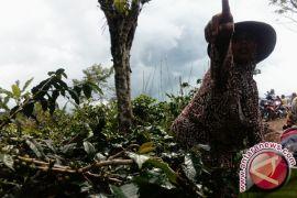 Wagub Jambi dukung petani kembangkan kopi Kerinci