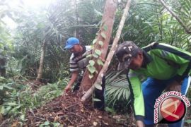 Warga Pematang Rahim tunggu SK hak kelola hutan gambut