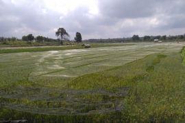Batanghari dorong petani berasuransi
