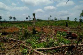 Dana reboisasi hutan-lahan di Batanghari Rp37,2 miliar
