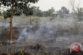 260 hektare lahan gambut Rohil terbakar