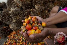 Ekspor minyak sawit melorot di kuartal pertama 2018