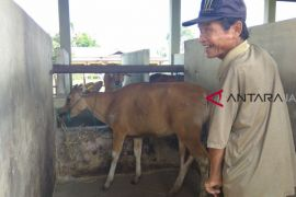 Disbunnak Batanghari cek kesehatan hewan ternak