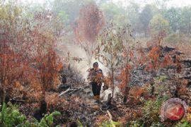 BPBD Riau antisipasi peningkatan karhutla selama libur Lebaran