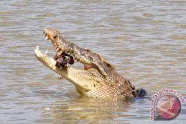 Pastur tewas diserang buaya saat pembaptisan