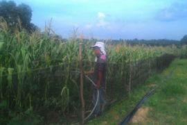 Hindari pemetikan,  tanaman  pameran HKP Jambi ditutup