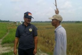 BPP Jambi kunjungi kelompok usaha mandiri Tanjabtim