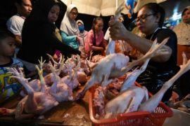 Harga ayam potong dan cabai turun karena pasokan bertambah