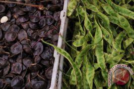 Pelajar Bengkulu ciptakan pestisida berbahan kulit jengkol